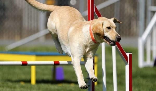 dog-training-services