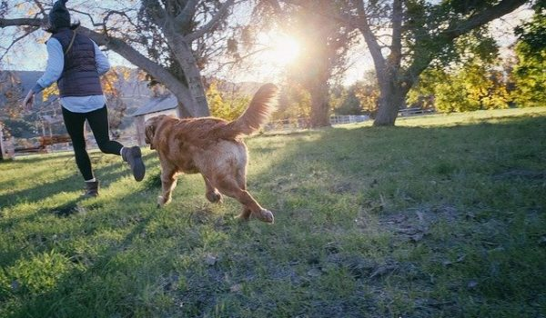 dog-walking-dorset